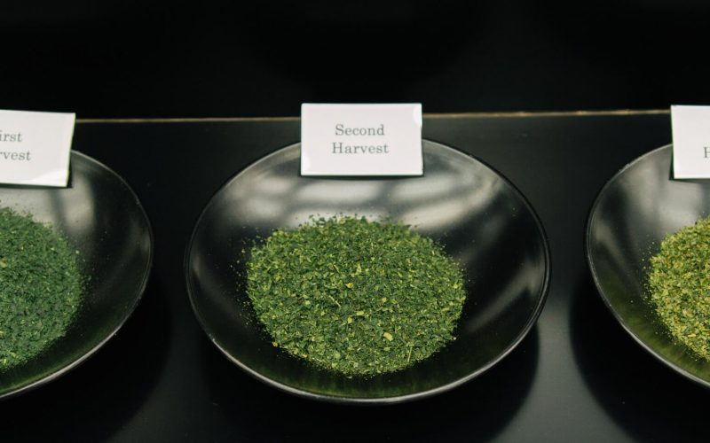 first-second-and-third-harvest-matcha